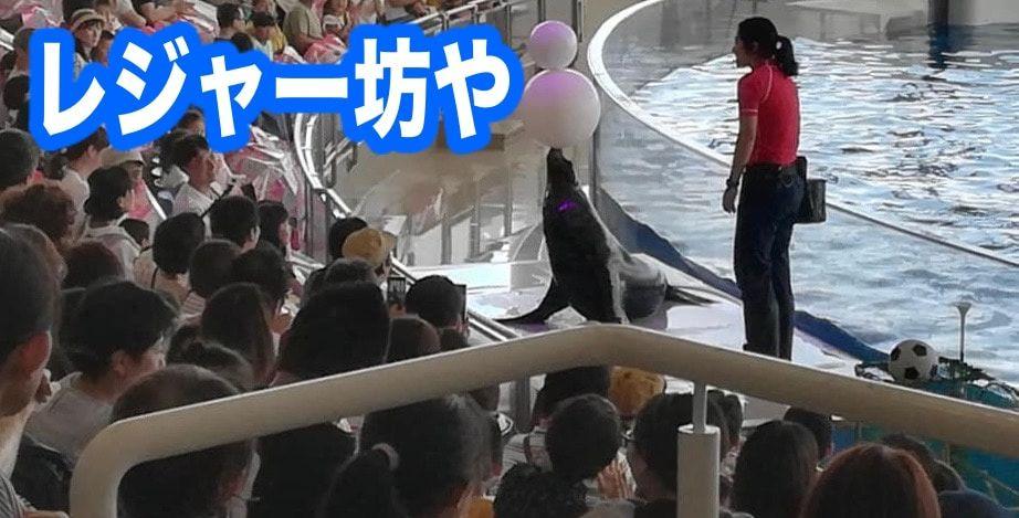 大洗水族館 アシカショー