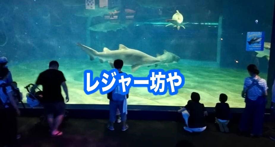 大洗水族館 サメ