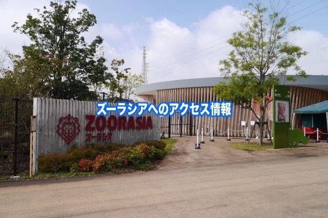 【ズーラシアへのアクセス】電車(中山・鶴ヶ峰) からバス&車の行き方まとめ