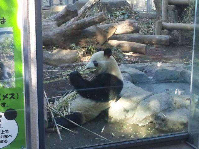 上野動物園 シャンシャン 混雑