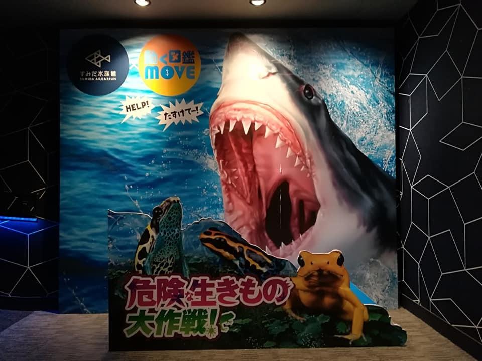 すみだ水族館 危険生きもの混雑