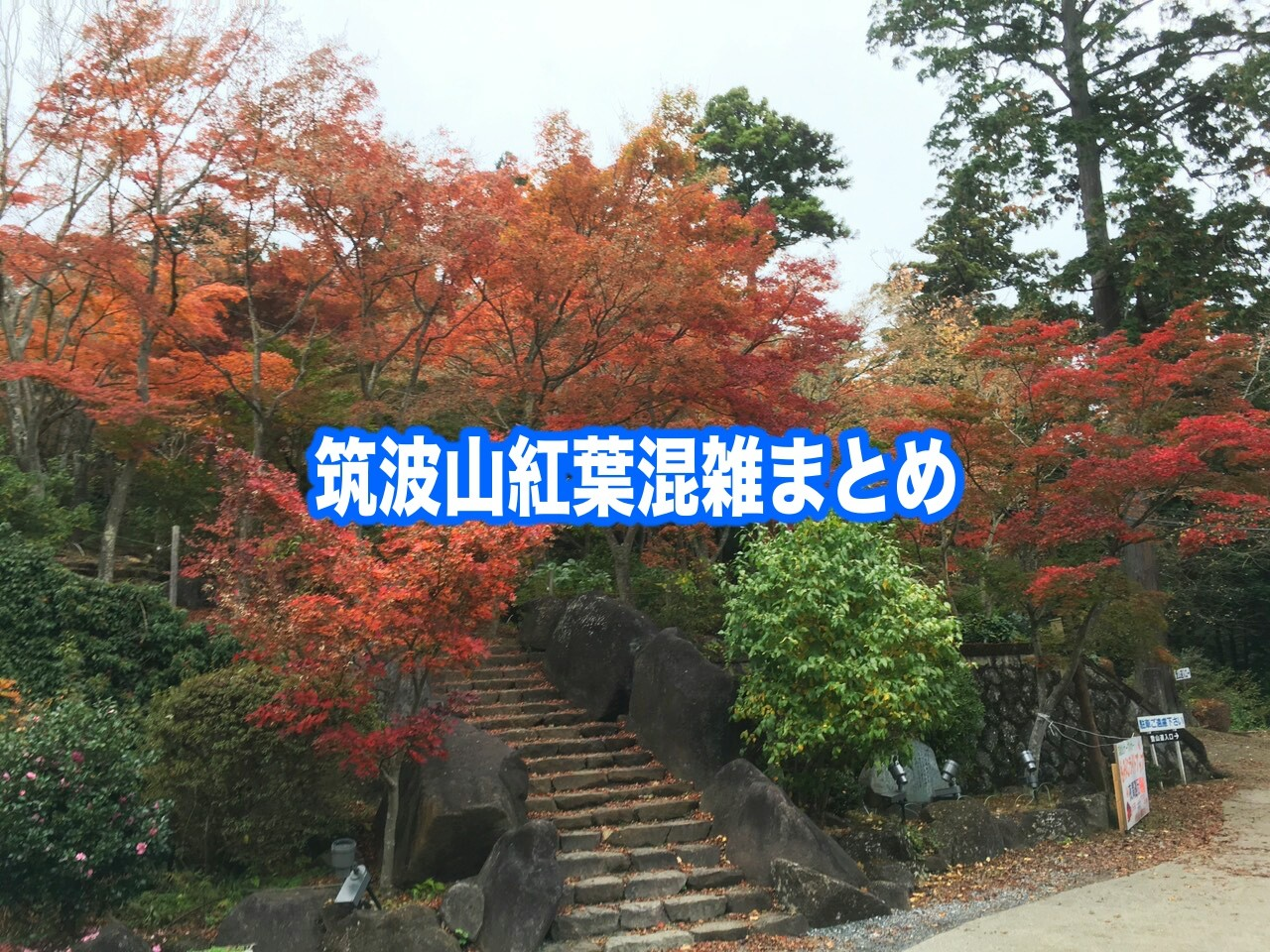 筑波山 紅葉 混雑