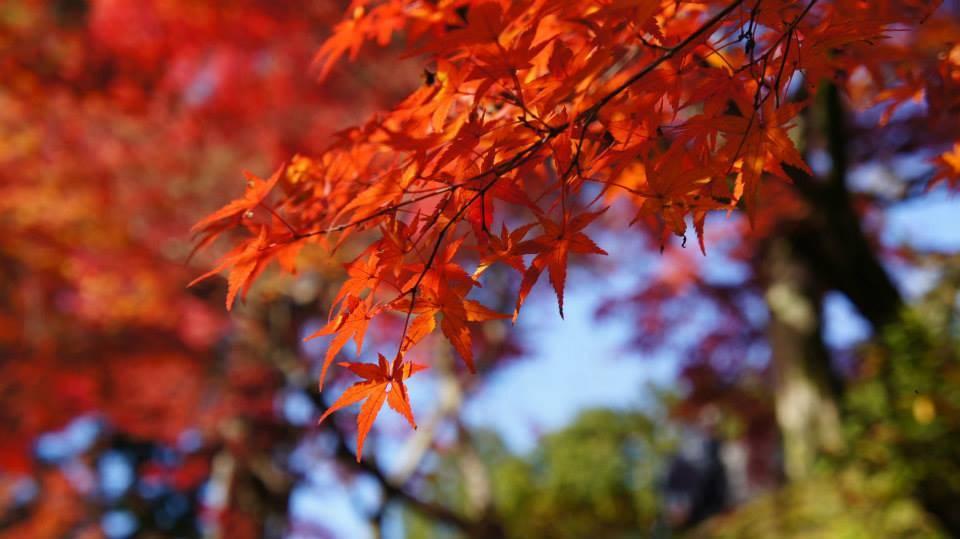 東福寺 紅葉 混雑