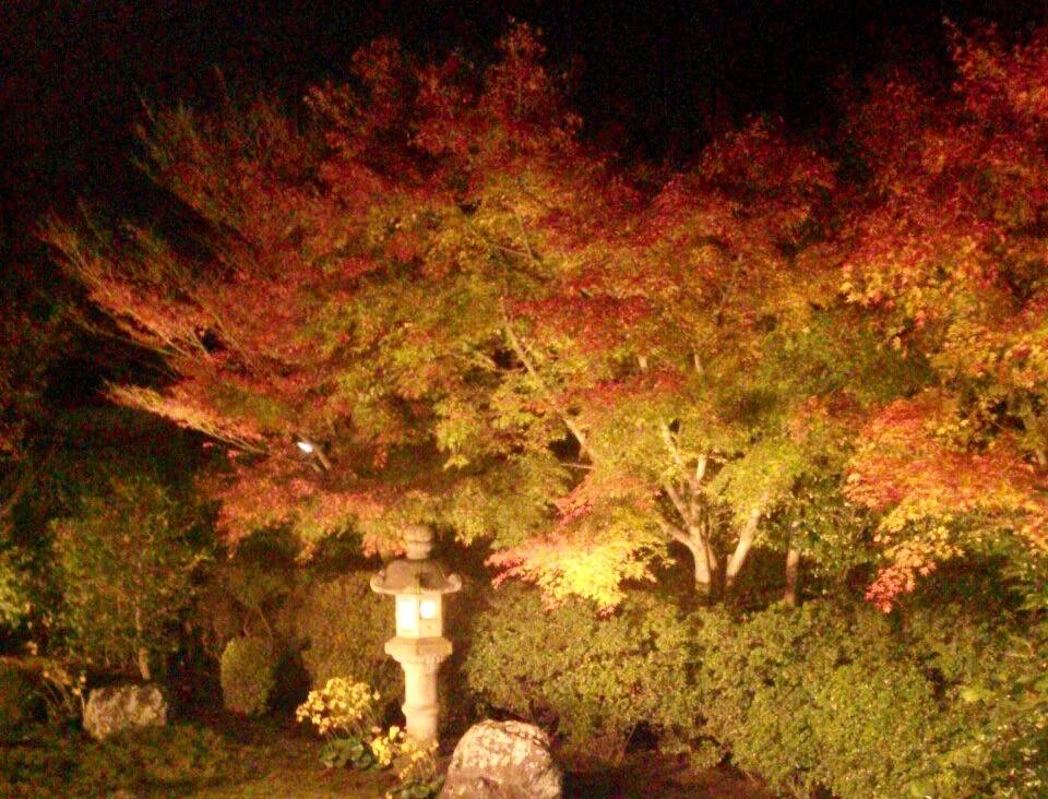 東福寺 ライトアップ 混雑