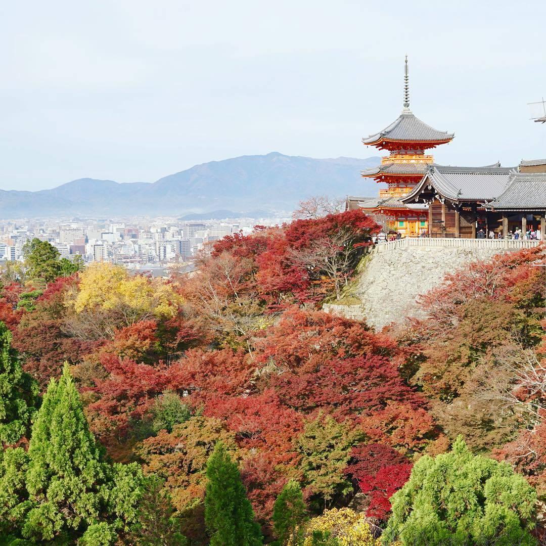 箱根 紅葉 混雑 京都