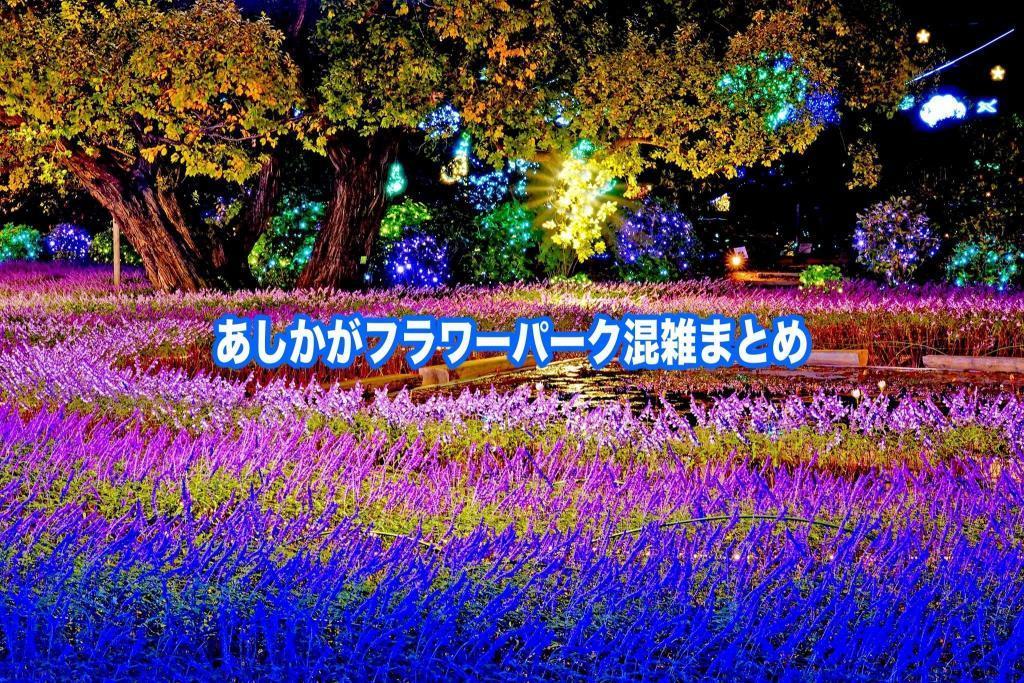 【あしかがフラワーパーク混雑状況2021】春夏休み(GWお盆) &藤と休日!駐車場攻略情報
