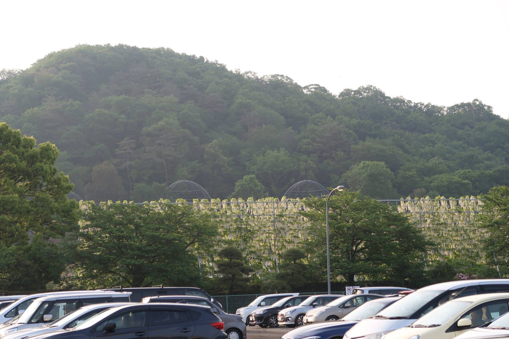 あしかがフラワーパーク 駐車場