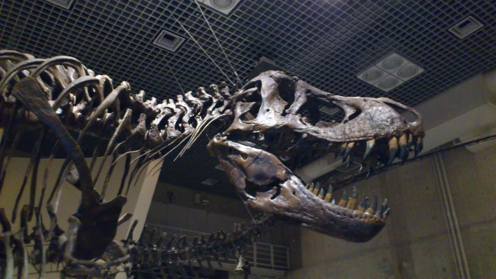 国立科学博物館 恐竜展 混雑