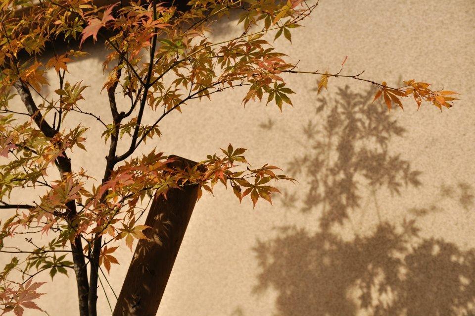 東福寺 紅葉 混雑回避