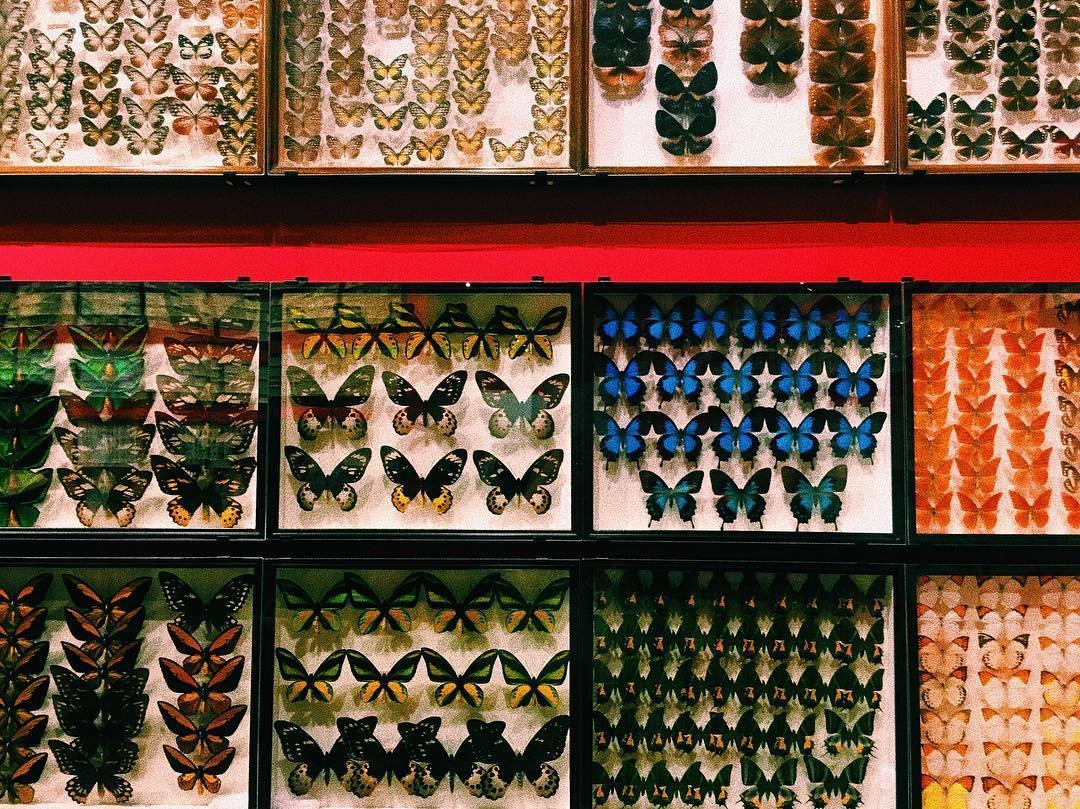 国立科学博物館 昆虫 混雑