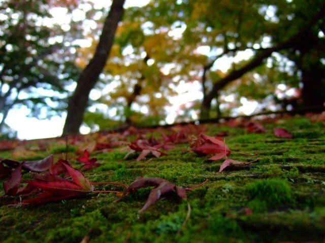 箱根強羅公園 紅葉 混雑