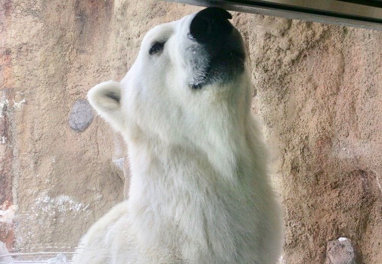 旭山動物園 もぐもぐタイム 混雑