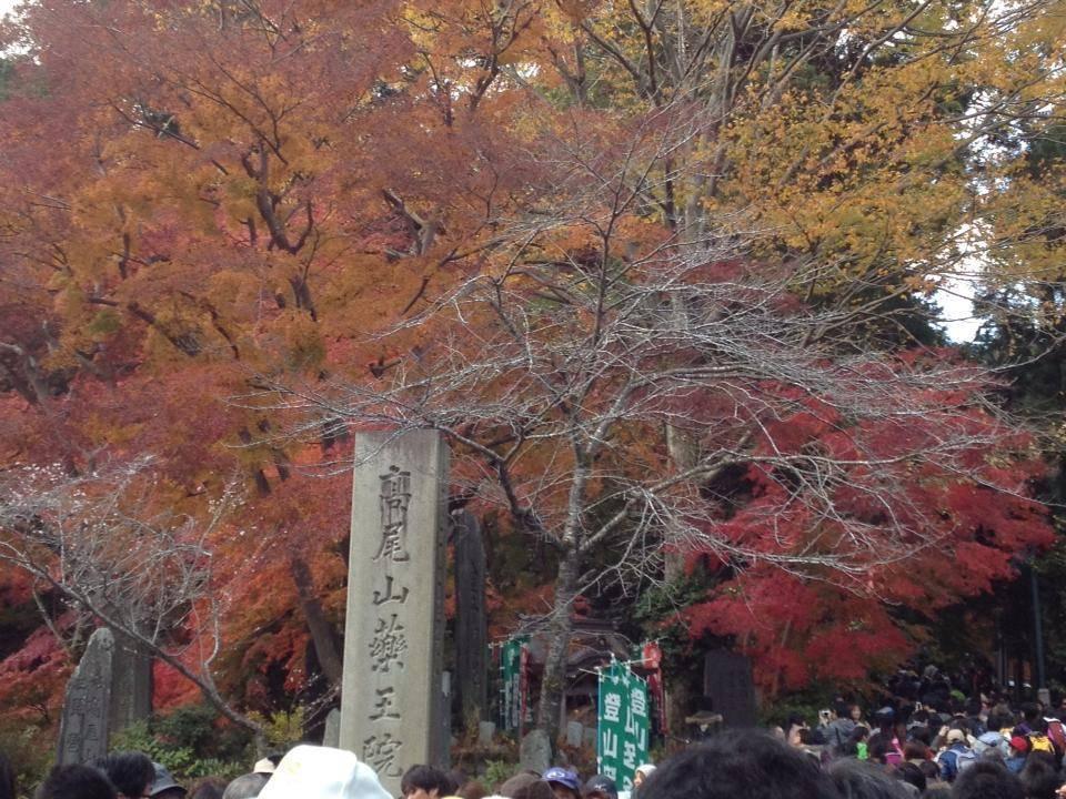 筑波山 高尾山 紅葉 混雑
