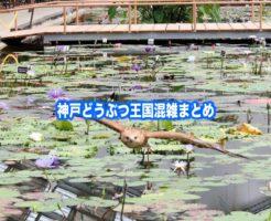 神戸どうぶつ王国 混雑
