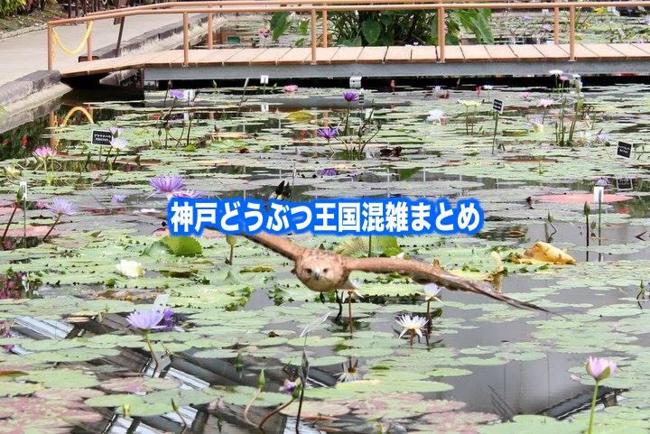 【神戸どうぶつ王国混雑状況2020】春夏冬休み(GWお盆) &平日と土日!駐車場攻略