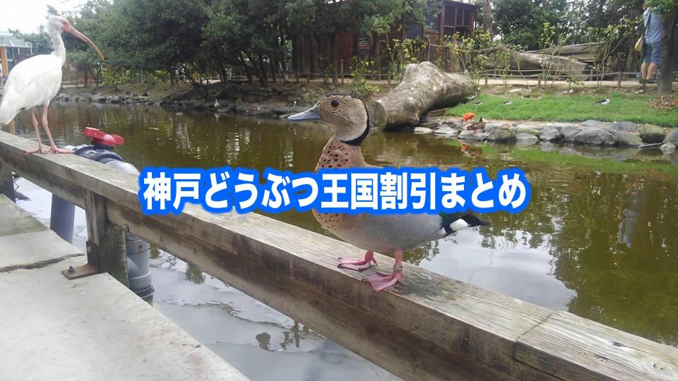 【神戸どうぶつ王国割引2021】最安値チケット100円引き!12クーポン格安入手法
