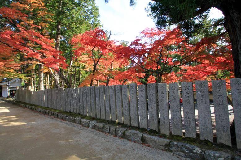 高野山 紅葉 混雑