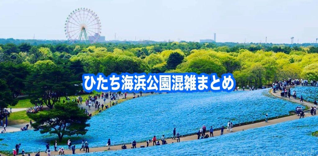 【ひたち海浜公園混雑予想2021】春夏休み(GWお盆コキア) &土日と平日!駐車場攻略
