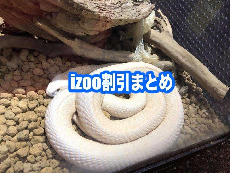 【体験型動物園izoo(イズー)割引2020】最安値200円引き!12クーポン格安入手法