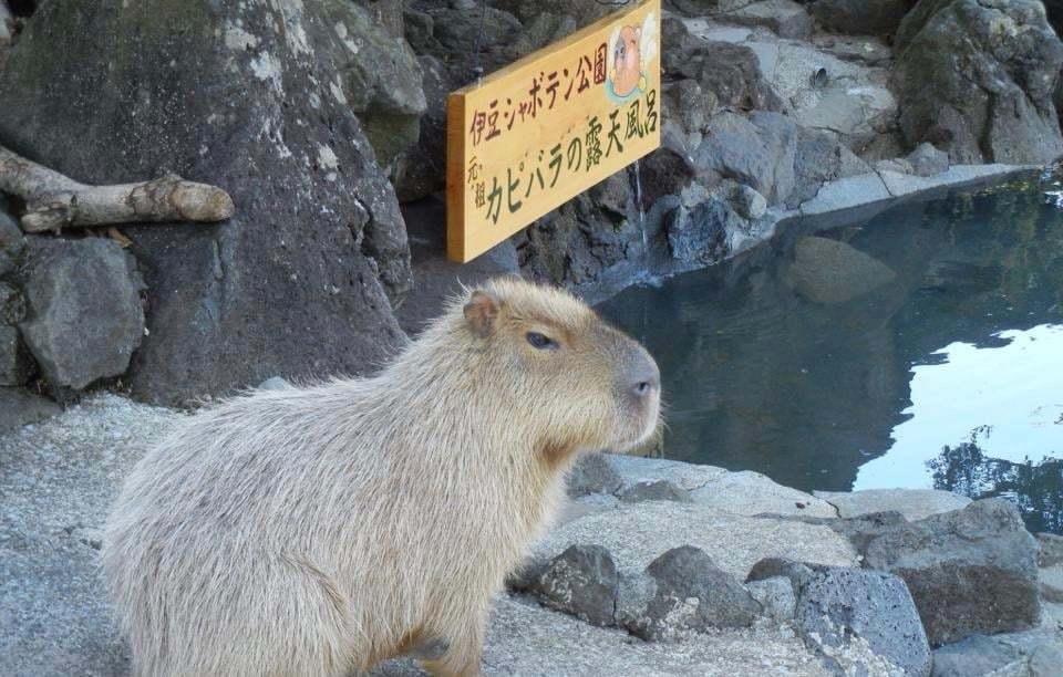 シャボテン動物公園 割引