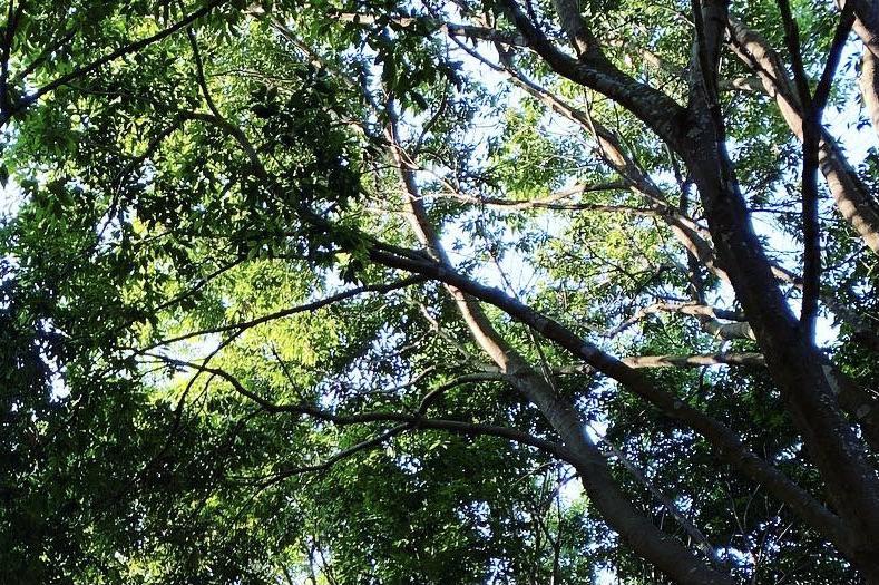 こもれび森のイバライド割引