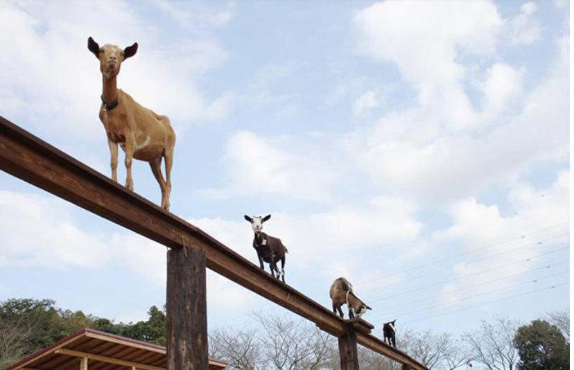 成田ゆめ牧場割引